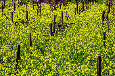 Sonoma County Vineyards Photograph - Wild Mustard Grass by Garry Gay