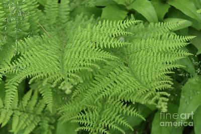 Photograph - Wild Natural Green Ferns In A Shade Garden by DejaVu Designs
