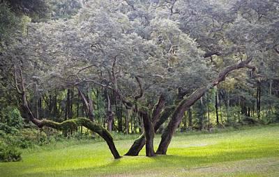Mixed Media - Wild Oak by Richard Rizzo