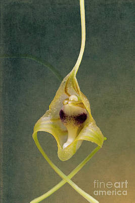 Photograph - Wild Orchid 2 by Heiko Koehrer-Wagner