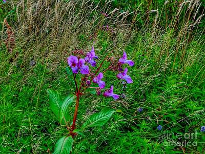 Photograph - Wild Orchid On Birkdale Common by Joan-Violet Stretch