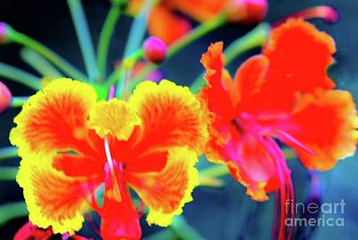 Art Print featuring the photograph Wild Orchids In Hawaii by D Davila