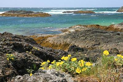 Photograph - Wild Pacific Beauty by Frank Townsley