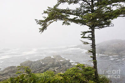 Photograph - In The Fog On The Wild Pacific Trail by Maria Janicki