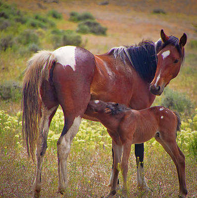 Photograph - Wild Paint  Mare And Foal by Waterdancer