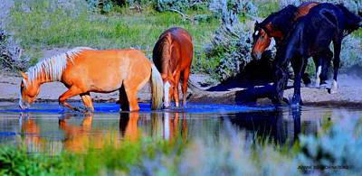 Photograph - wild Palomino stallion of the Great Basin Country  by Jeanne  Bencich-Nations