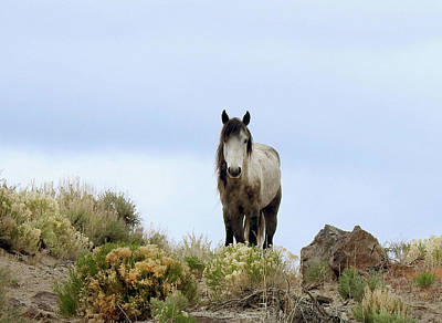 Photograph - Wild Pearl by Sandra O'Toole