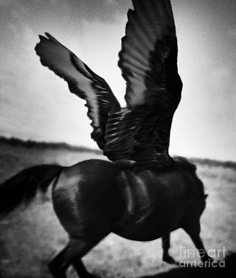 Wall Art - Photograph - Wild Pegasus by Kent Miklenda