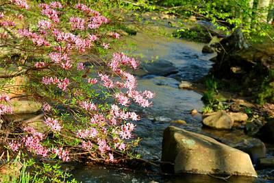 Photograph - Wild Piedmont Azalea 4 by Kathryn Meyer