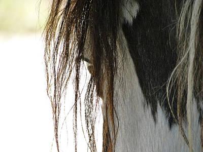 Wild Pinto Mustang Art Print