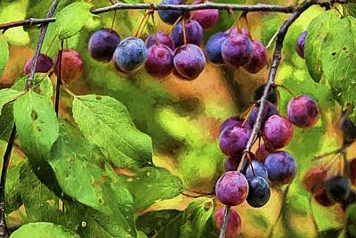Photograph - Wild Plums by JC Findley