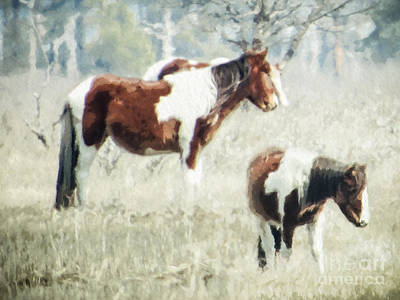 Photograph - Wild Ponies by Dawn Gari