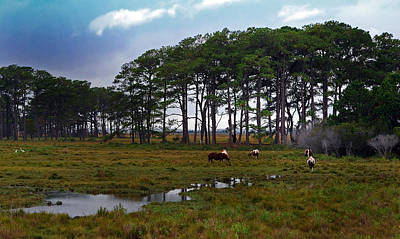 Wild Ponies Of Assateague Art Print by Lori Tambakis