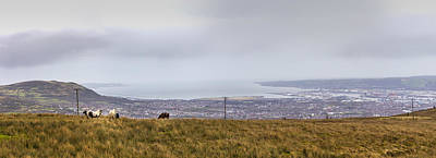 Photograph - Wild Ponies On Divis Black Mountain by Glen Sumner