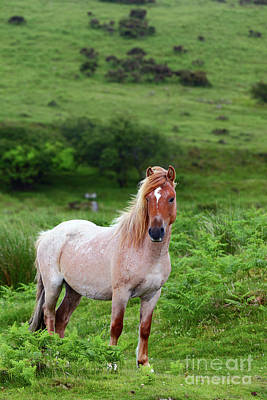 Bodmin Photograph - Wild Pony On Bodmin Moor Cornwall by James Brunker