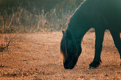 Photograph - Wild Pony by Travis Rogers