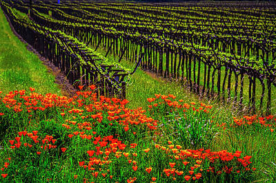 Photograph - Wild Poppies And Vineyards by Garry Gay