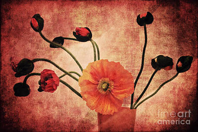 Wild Poppies Art Print by Angela Doelling AD DESIGN Photo and PhotoArt