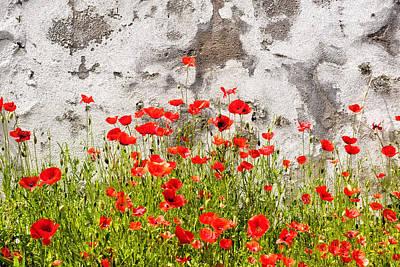 Photograph - Wild Poppies by Fabrizio Troiani