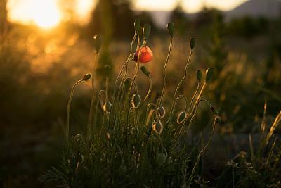 Riddler Photograph - Wild Poppies by Ian Riddler