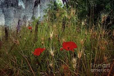 Photograph - Wild Poppies by Liz Alderdice