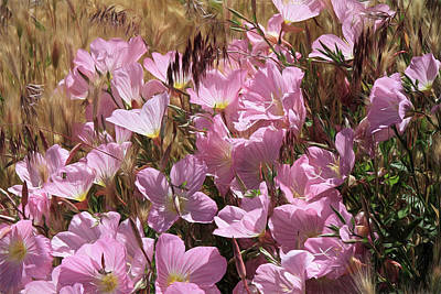 Wild Primrose Art Print by Donna Kennedy