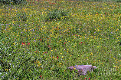 Photograph - Wild Profusion by Jim Garrison