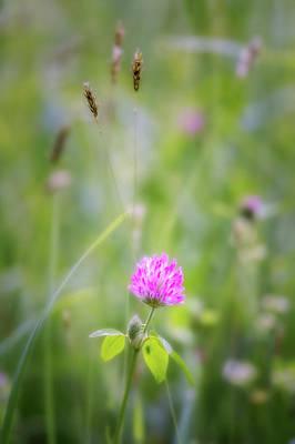 Wildflower Photograph - Wild Purple Clover by Bill Wakeley