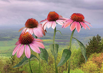 Digital Art - Wild Purple Coneflowers by IM Spadecaller