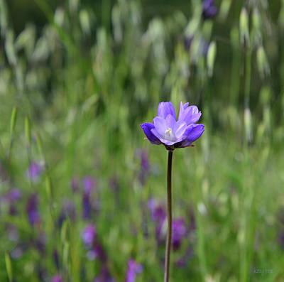 Blue Dick Photograph - Wild Purple by Kathy Yates