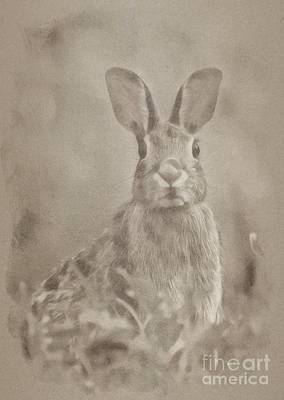 Animals Drawings - Wild Rabbit by Esoterica Art Agency