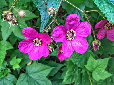 Painting - Wild Raspberry Flowers by Anne Sands