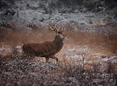 On Trend At The Pool - Wild Winter Stag by MSVRVisual Rawshutterbug