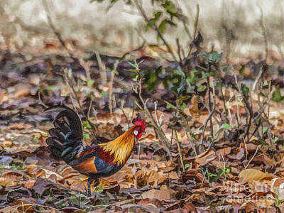 Digital Art - Wild Red Junglefowl Gallus Gallus Kanha National Park India by Liz Leyden