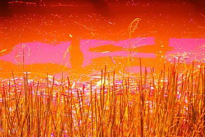 Wild Reeds I Original