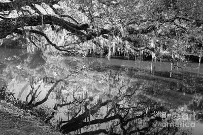 St. Lucie County Photograph - Wild Reflection by Liesl Walsh