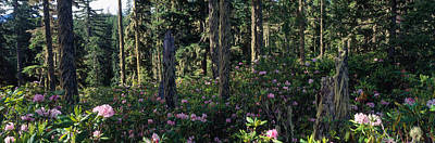 Wild Rhododendrons Mount Hood National Art Print by Panoramic Images