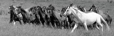 Photograph - Wild Rodeo Horses by Athena Mckinzie