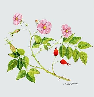 Painting - Wild Rose - Rosaceae by Michael Earney