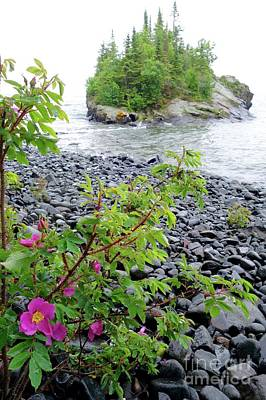 Photograph - Wild Roses And Island by Sandra Updyke