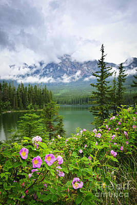 Wild Roses And Mountain Lake In Jasper National Park Art Print