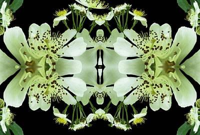 New Zealand Mixed Media - Wild Roses by Nancy Pauling
