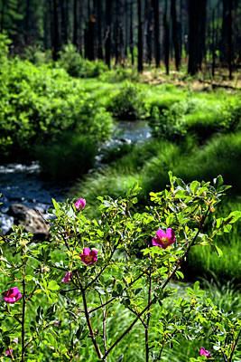 Photograph - Wild Roses Riverside  by Saija Lehtonen