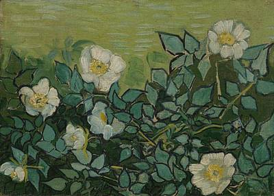 Painting - Wild Roses Saint-remy-de-provence, May-june 1889 Vincent Van Gogh 1853 - 1890 by Artistic Panda