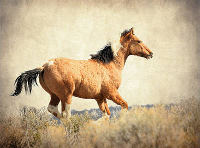 Photograph - Wild Runner by Steve McKinzie