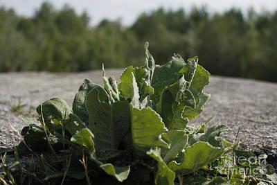 Photograph - Wild Salad by Donato Iannuzzi