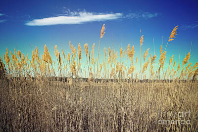 Photograph - Wild Sea Oats by Colleen Kammerer