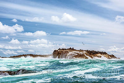 Photograph - Wild Seals Colony On The Stony Island by Anna Om