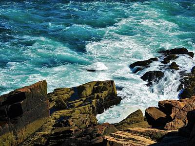 Photograph - Wild Shore by Lisa Dunn
