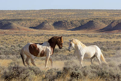 Photograph - Wild Spirit by Jack Bell